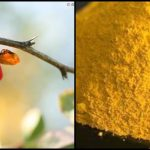 Berberine as Effective as Metformin for Blood Glucose Control